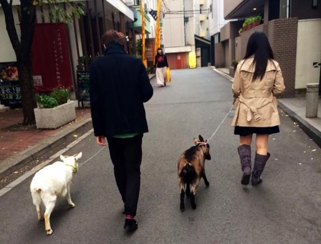 animal-cafe-tokyo