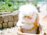 สวรรค์ของเหล่าทาส 5 คาเฟ่สัตว์เลี้ยง สุดน่ารักในโตเกียวのサムネイル
