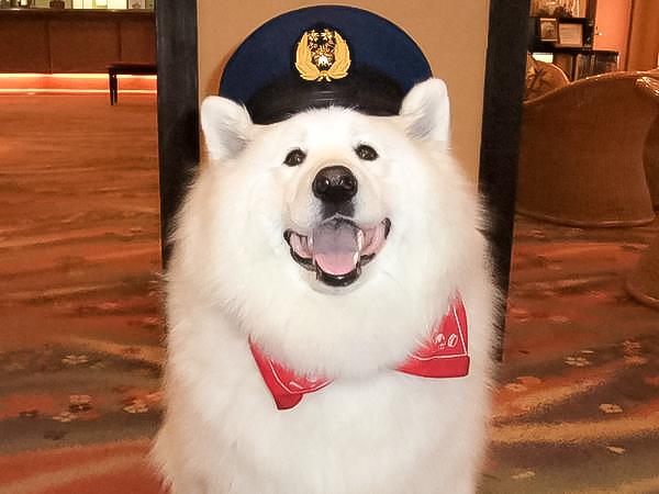 Angel Cute Hotel Dog