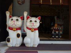 ขอพรความรัก โตเกียว ที่ 4 ศาลเจ้าโด่งดัง จะไม่นกอีก!
