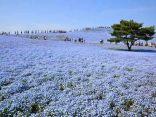 31 สถานที่ท่องเที่ยวญี่ปุ่น ที่ควรไปสักครั้งในชีวิต!のサムネイル