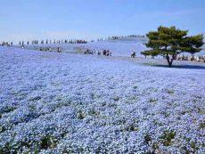 31 สถานที่ท่องเที่ยวญี่ปุ่น ที่ควรไปสักครั้งในชีวิต!