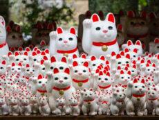 Gotokuji Temple ตำนานวัดแมวกวักโชค โตเกียว