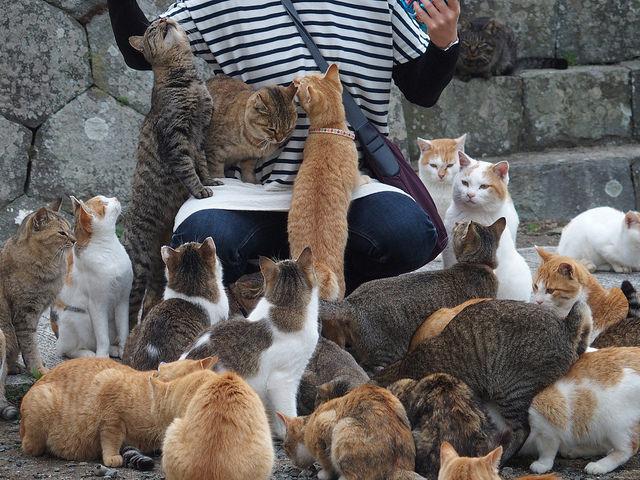 เที่ยวเกาะแมวเหมียว Ainoshima ที่ญี่ปุ่น สวรรค์ของเหล่าทาสแมว