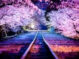 12 จุดชมซากุระบาน ที่สวยจนแชะภาพเพลินลืมเวลาのサムネイル