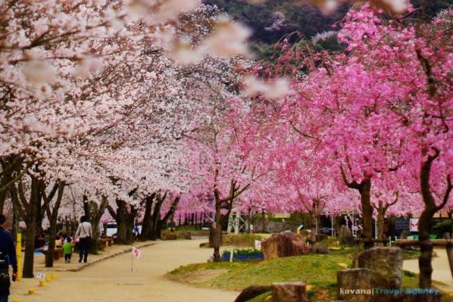 64 Kasagiyama park