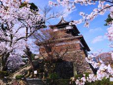 100 จุดชมซากุระ สวยตรึงใจ ชาวญี่ปุ่นตลอดกาล