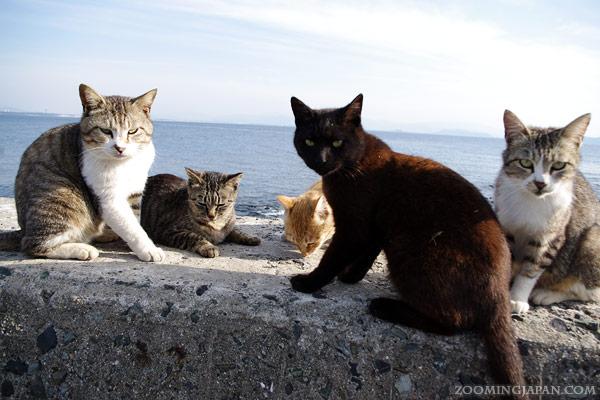 เกาะแมว