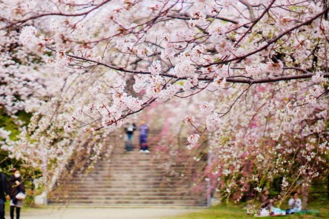 91 nishi park
