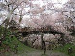 12 จุดชม ซากุระบาน ที่สวยจนแชะภาพเพลินลืมเวลาのサムネイル
