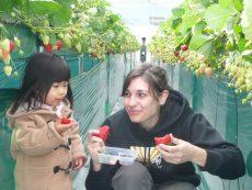 หวานฉ่ำชื่นใจ เก็บสตรอเบอร์รี่ญี่ปุ่น ที่ชิบะอร่อยได้ทั้งครอบครัว
