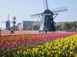 ไปคิวชูเหมือนอยู่ฮอลเแลนด์ที่ สวนสนุก Huis Ten Bosch