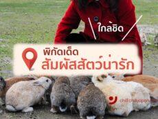 เกาะกระต่าย และ แหล่งรวม สัตว์ญี่ปุ่น น่ารัก 6 พิกัดคิวท์