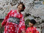 ยูคาตะ กิโมโน แต่งสวยคลาสสิกตะลอนเกียวโตのサムネイル