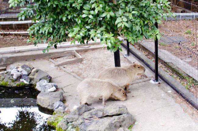 800-omiya-zoo2