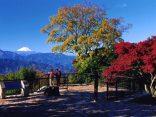 ทริปกินลมชมวิวที่ ภูเขาทาคาโอะ สุดชิลล์จากโตเกียวชั่วโมงเดียวถึงのサムネイル