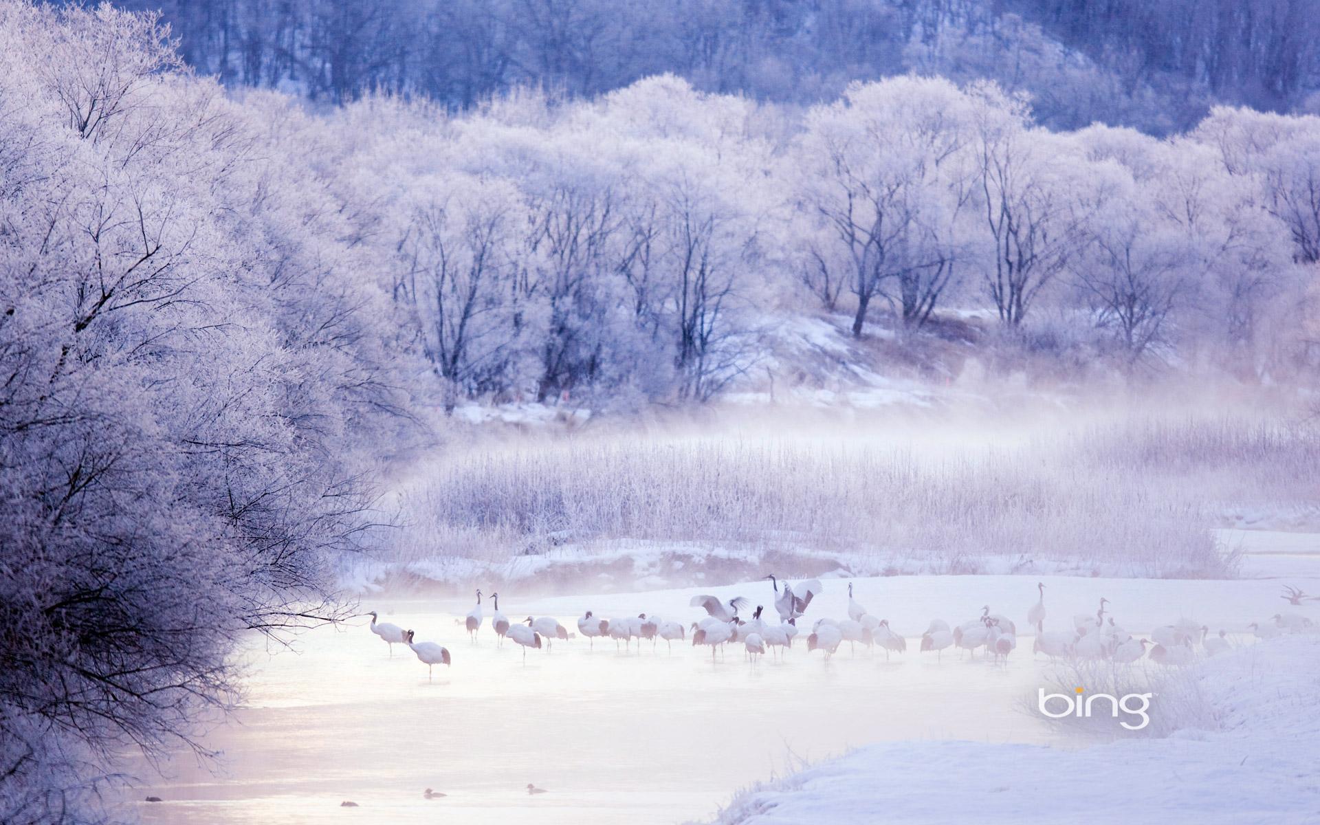 Red-crowned cranes in Kushiro-Shitsugen National Park, Hokkaido, Japan