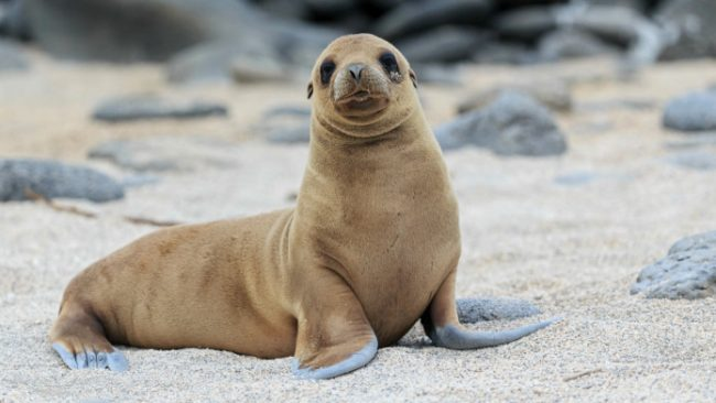 sea-lion-trouble