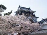 สนุกทั้งปี ที่ Okazaki ยลความงามสี่ฤดู กับงานเทศกาลสุดปังのサムネイル