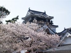 สนุกทั้งปี ที่ Okazaki ยลความงามสี่ฤดู กับงานเทศกาลสุดปัง