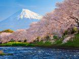 อัพเดทล่าสุด ! พยากรณ์ ซากุระบาน 2017 ทั่วญี่ปุ่น ไปช่วงไหนสวยดูที่นี่のサムネイル