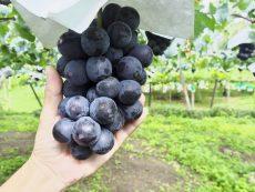 เที่ยวฟินกินจากต้นที่ 6 สวนผลไม้ เมืองโกเบ สดอร่อยได้บรรยากาศ