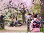 มารยาทการ ชมซากุระญี่ปุ่น ที่ควรรู้เพื่ออรรถรสดีงามのサムネイル