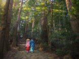 เดินเท้าชมความงดงามเส้นทางแสวงบุญมรดกโลก Kumano Kodoのサムネイル