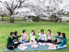 Tips เตรียมพร้อม ชมดอกซากุระ ให้ฟินสุดใจ ที่คุณต้องดู