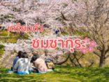 เตรียมตัวเที่ยว เทศกาล ฮานามิ  ชมซากุระสไตล์ญี่ปุ่น แบบโปรのサムネイル
