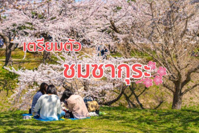 เตรียมตัวเที่ยว เทศกาล ฮานามิ  ชมซากุระสไตล์ญี่ปุ่น แบบโปร