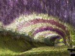 10 ที่ เที่ยว ญี่ปุ่น ต้องไปเยือนด้วยตัวเอง เห็นด้วยตา อวดภาพให้โลกเห็นのサムネイル