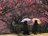 บุกจูบุใจกลางญี่ปุ่น เที่ยว Gamagori และ Okazaki สนุกชมเมืองสวย ประทับใจไม่ซ้ำのサムネイル