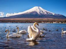 5 ทะเลสาบ ฟูจิ  ดื่มด่ำบรรยากาศ ภูเขาไฟงดงาม สัญลักษณ์ญี่ปุ่น