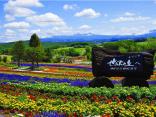 หลงเสน่ห์ ฮอกไกโดหน้าร้อน กับ 13 ทุ่งดอกไม้หลากสี วิวดีสุดๆ!のサムネイル