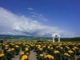 หลงเสน่ห์ ฮอกไกโดหน้าร้อน กับ 13 ทุ่งดอกไม้หลากสี วิวดีสุดๆ!