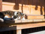 เมี้ยว~ ทาสแมวทั้งหลายเอ๋ย ไปเที่ยว เกาะแมว ใน ญี่ปุ่น กันเถอะ!