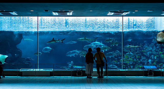 Suma Aqualife Park