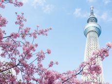 5 กิจกรรมไม่ควรพลาดเมื่อไปเยือน โตเกียวสกายทรี