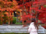 คู่มือ แต่งตัวไปญี่ปุ่นเดือนพฤศจิกายน พร้อมข้อมูลการเตรียมตัวเที่ยวใบไม้เปลี่ยนสีのサムネイル