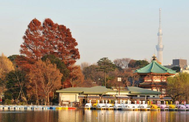 ใบไม้เปลี่ยนสีโตเกียว