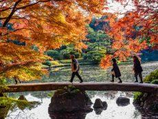รวมพิกัดชม ใบไม้เปลี่ยนสีโตเกียว พร้อมเทศกาลประดับไฟที่ไม่ควรพลาด