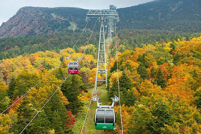 สัมผัสธรรมชาติ วิถีชีวิตชนบท ที่ Yamagata เมืองที่จะทำให้คุณประทับใจไม่ลืม
