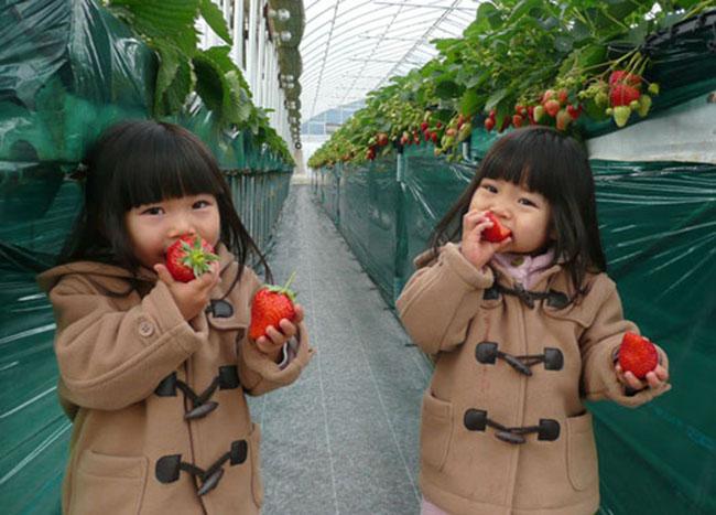 สวนผลไม้ ใกล้โตเกียว