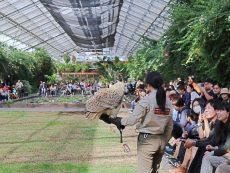 รีวิว เที่ยวโกเบ เยือน Kobe animal kingdom ดินแดนสัตว์น่ารัก