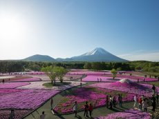 5 สถานที่เที่ยวใน Yamanashi ที่จะทำให้ฟินกับวิวภูเขาไฟฟูจิ !