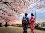 Update!!! แหล่งชม ซากุระ 2019 ชมชิลชิลแบบไม่ต้องแย่งใคร ในโตเกียวのサムネイル