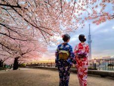 Update!!! แหล่งชม ซากุระ 2019 ชมชิลชิลแบบไม่ต้องแย่งใคร ในโตเกียว