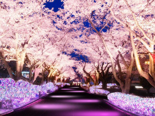 ควงคู่หวานไปกุมมือสวีทที่สวนสนุก Yomiuriland พร้อมชม ซากุระ โตเกียว