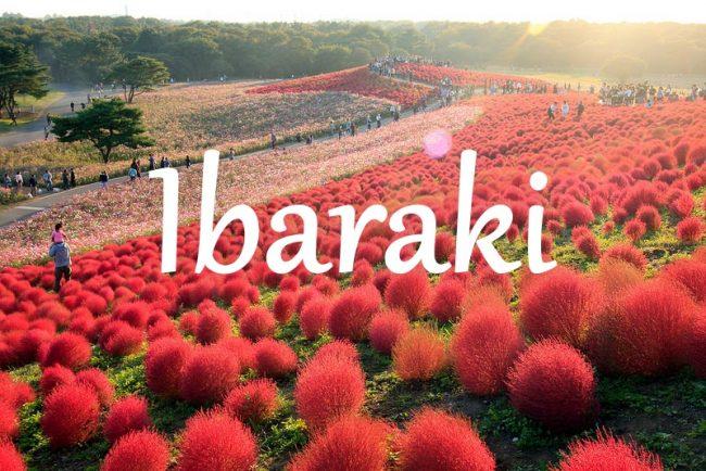 ชวนเข้าไปสู่โลกของ Ibaraki  ดินแดนที่เปลี่ยนสีได้